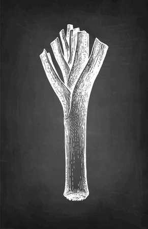 Chalk sketch of leek. Ilustração