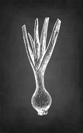 Chalk sketch of scallion.