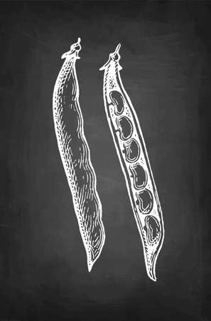 Chalk sketch of common bean Ilustração