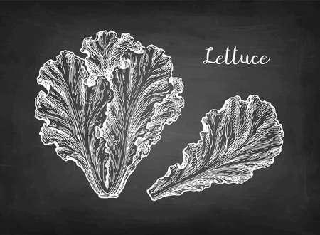 Chalk sketch of lettuce.