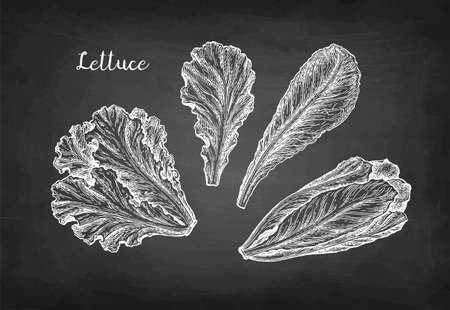 Lettuce chalk sketches set. Ilustração