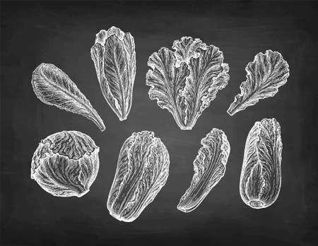 Lettuce ink sketches set.  イラスト・ベクター素材