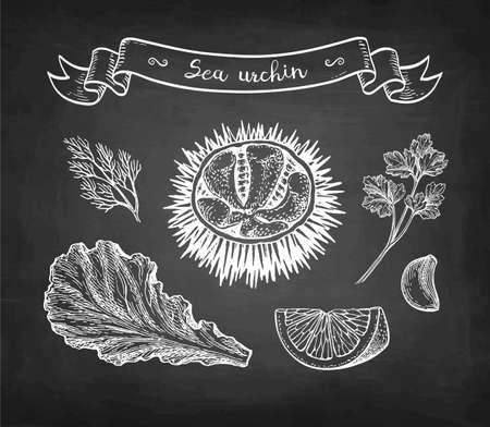 Chalk sketch of sea urchin.