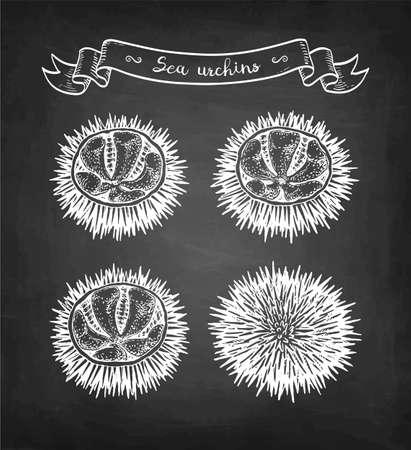 Chalk sketch of sea urchins.