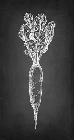 Chalk sketch of daikon.  イラスト・ベクター素材