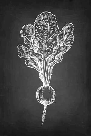 Chalk sketch of radish