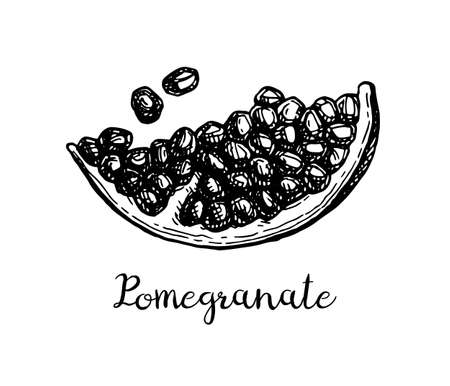 Ink sketch of pomegranate.