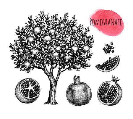 Pomegranate ink sketch collection.