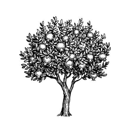 Ink sketch of pomegranate tree.
