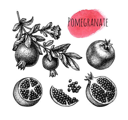 Pomegranate ink sketch set.