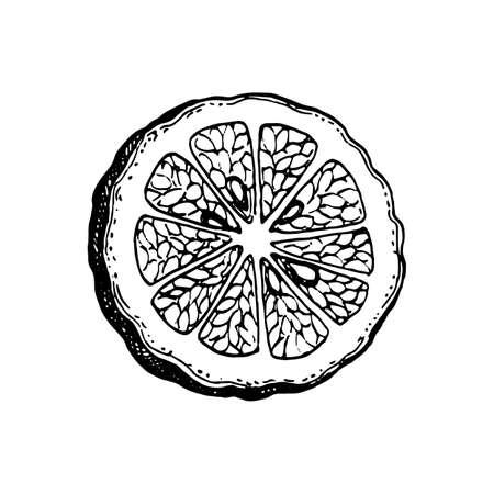 Ink sketch of bergamot orange