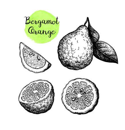 Ink sketch of bergamot orange Ilustracje wektorowe
