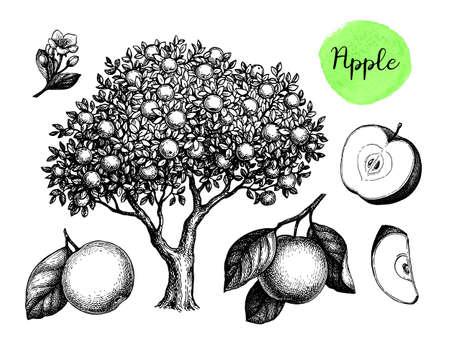Apple sketch set. Иллюстрация