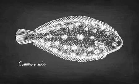 Chalk sketch of common sole.