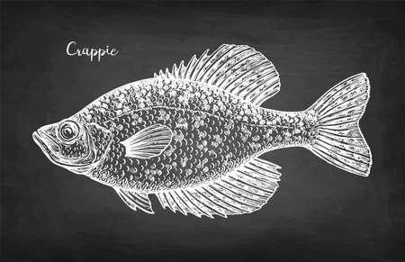 Crappie fish chalk sketch