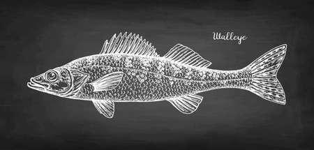 Walleye fish chalk sketch 일러스트