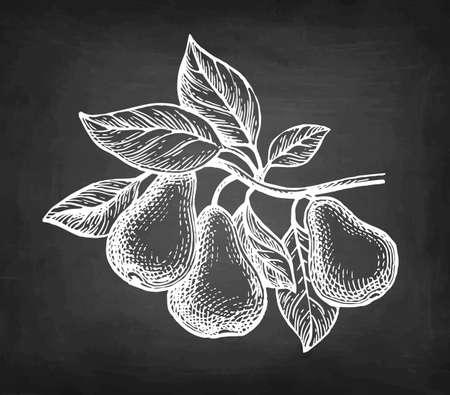 Chalk sketch of pear.