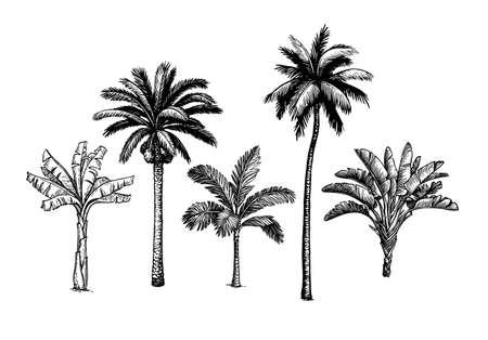 Palm tree set illustration