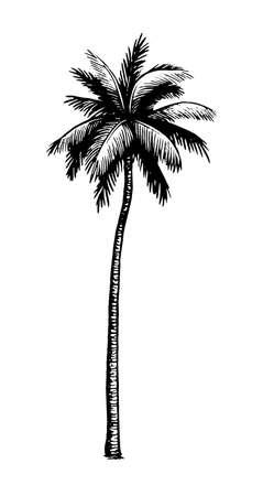 Coconut palm tree.