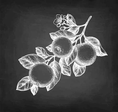 Chalk sketch of branch with apples. Illustration