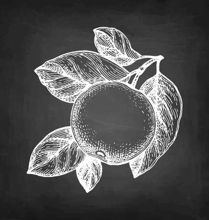 Chalk sketch of apple.