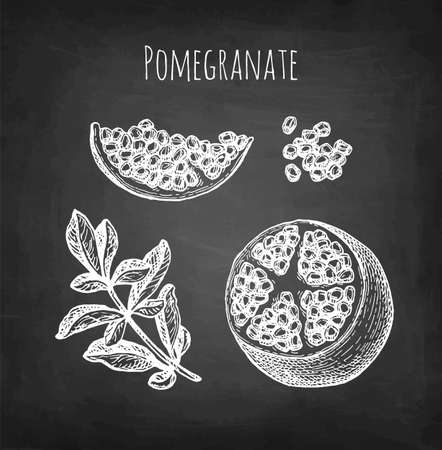 Pomegranate chalk sketch.
