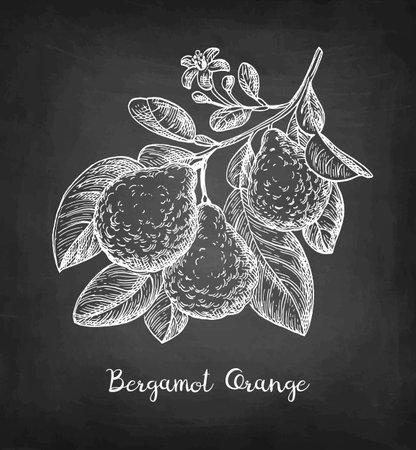 Chalk sketch of bergamot orange Ilustración de vector