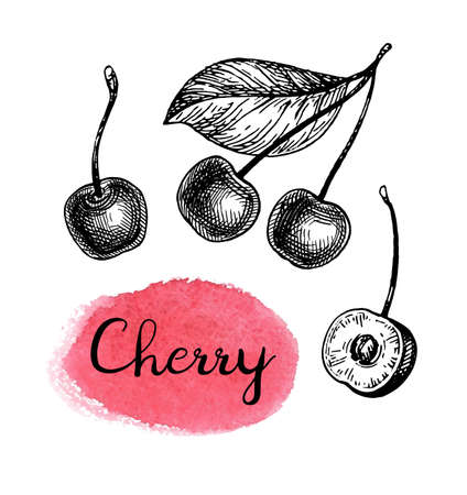 Cherry ink sketch. 일러스트