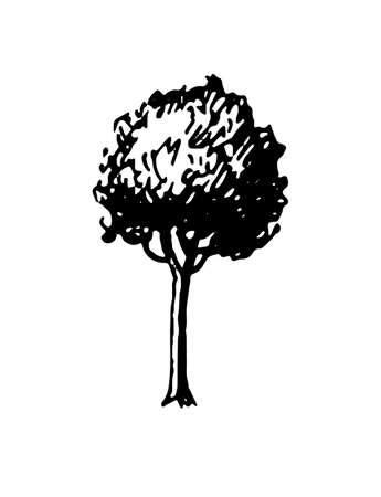 Ink sketch of tree. Illusztráció