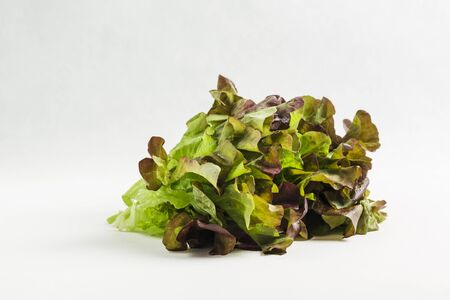 lettuce isolated on white background, close up, copy space, vegetables for healthy eating