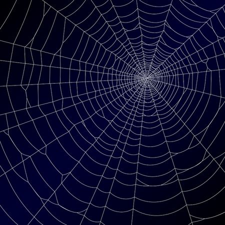 spider web: Spiders web.