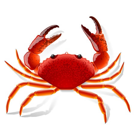 Red crab Stock Vector - 9882064