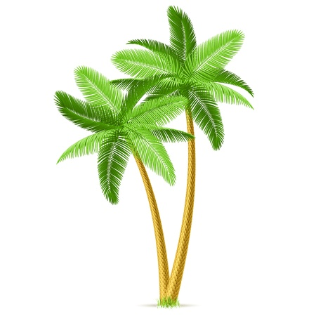 Tropical palm trees Stock Vector - 9882062