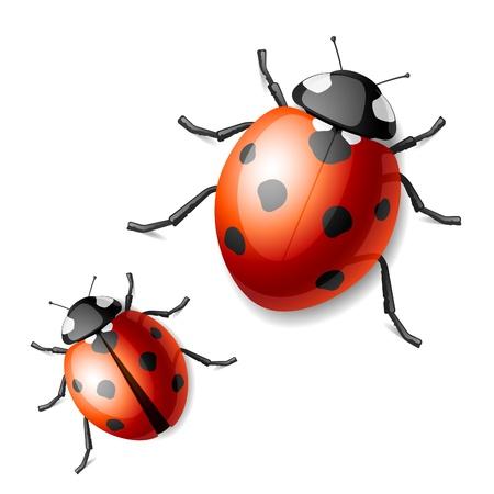 ladybirds: Ladybird Illustration