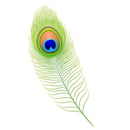Peacock feather Stock Vector - 9882156
