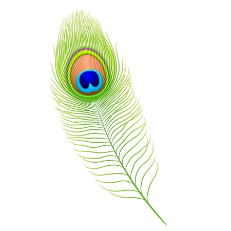 piuma di pavone: Piume di pavone Vettoriali