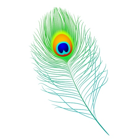 feather pen: Peacock feather  Illustration