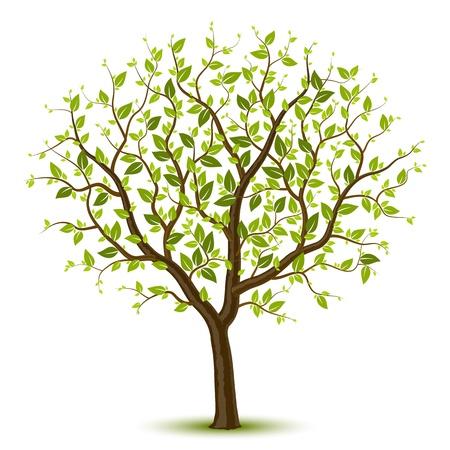 Boom met groene gebladerte Vector Illustratie