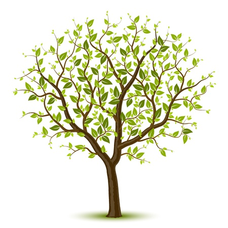 bark: Tree with green leafage Illustration