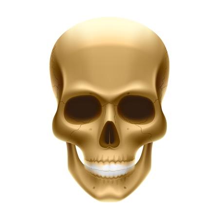 Human skull Stock Vector - 9882435