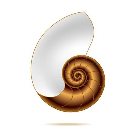 Nautilus shell Stock Vector - 9882262