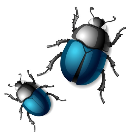 dung: Beetle Illustration