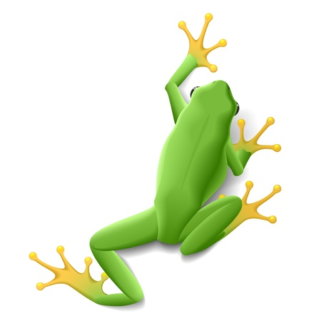 reptiles: Green frog Illustration