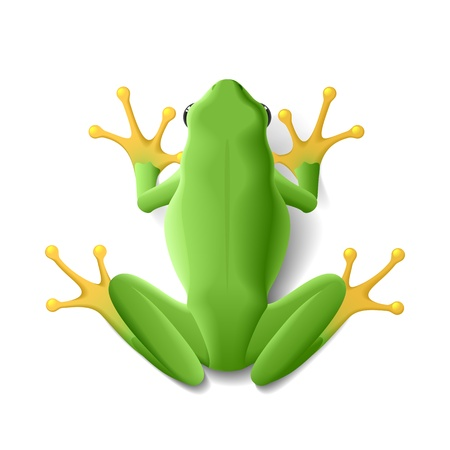 toes: Green frog Illustration