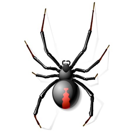 halloween spider: Black Widow spider Illustration