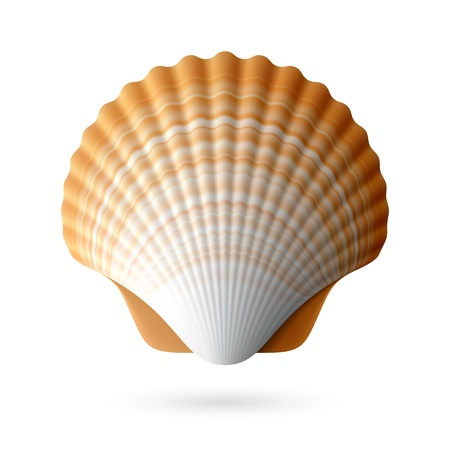 petoncle: coquillage de feston