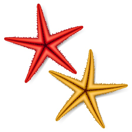 star shape: Starfish