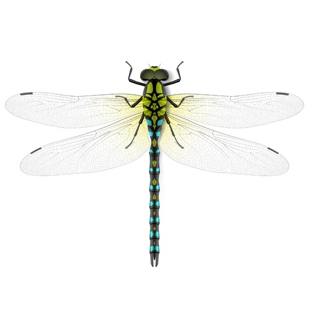 dragon fly: dragonfly