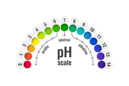 pH value scale chart for acid and alkaline solutions, acid-base balance infographic  イラスト・ベクター素材
