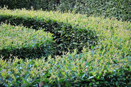 Bushes are trimmed in a variety of geometric shapes. Garden